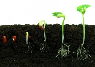 10 Easiest Vegetables to Grow from Seed