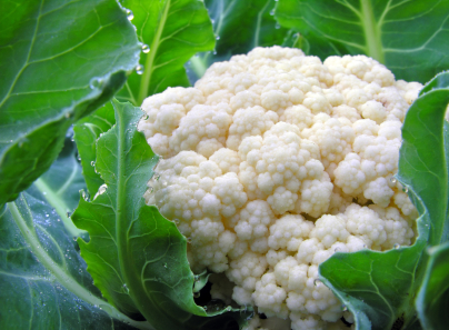 How to Grow Cauliflower