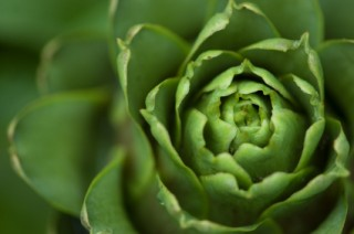 10 Facts About Artichokes