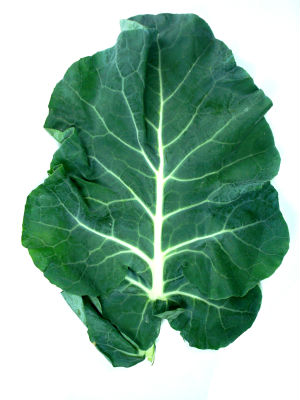 broccoli leaf