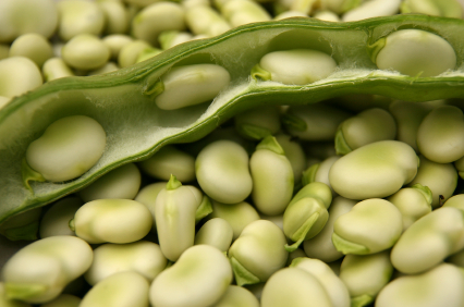 How to Grow Fava Beans