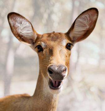How to Deter Deer from Your Garden