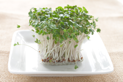 6 Essential Microgreen Growing Supplies