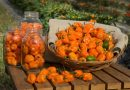 How to Grow Habaneros