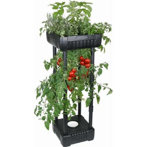 How to Grow Upside Down Tomatoes