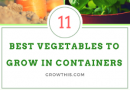 11 Best Vegetables To Grow In Containers