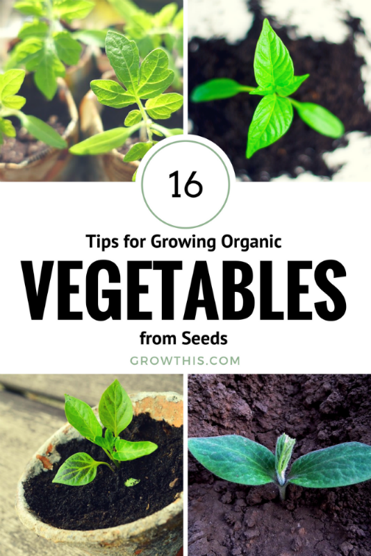 16 Tips for Growing Organic Vegetables from Seed