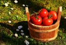 13 Best Vegetables To Grow At Home
