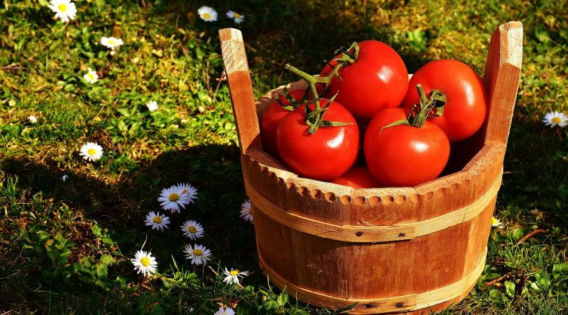 Best Vegetables to Grow at Home