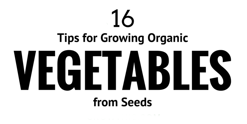 tips for growing organic vegetables from seeds